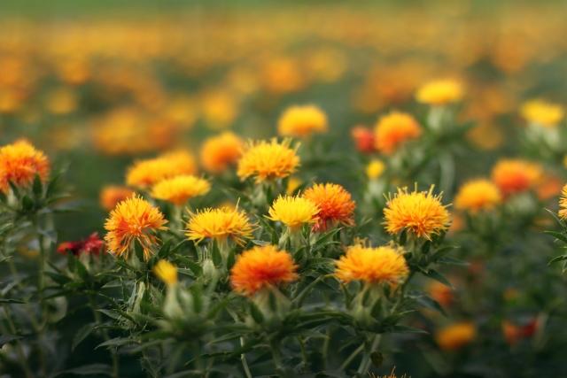 桶川市べに花ふるさと館休館中
